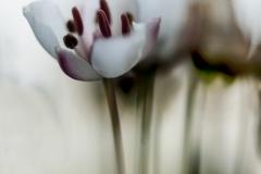 Rob Dauvillier bloem 1