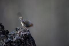 vogels in beweging